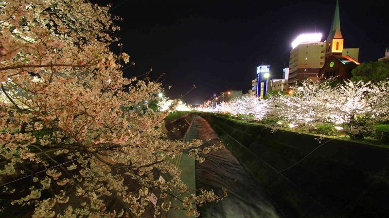 s_IK_お花見5選_01生田川公園