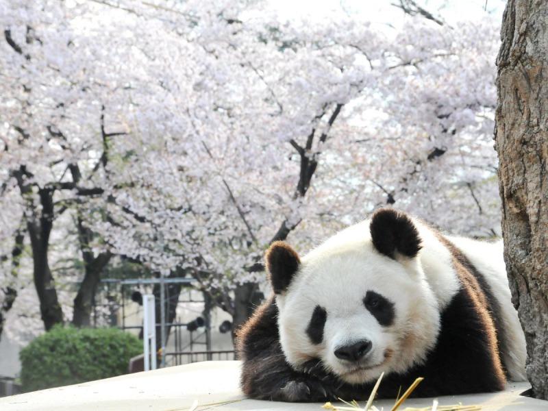 s_IK_お花見5選_02王子動物園