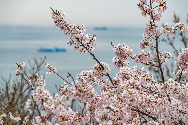 須磨浦公園・須磨浦山上_051