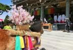 摩耶詣祭 feelKobe