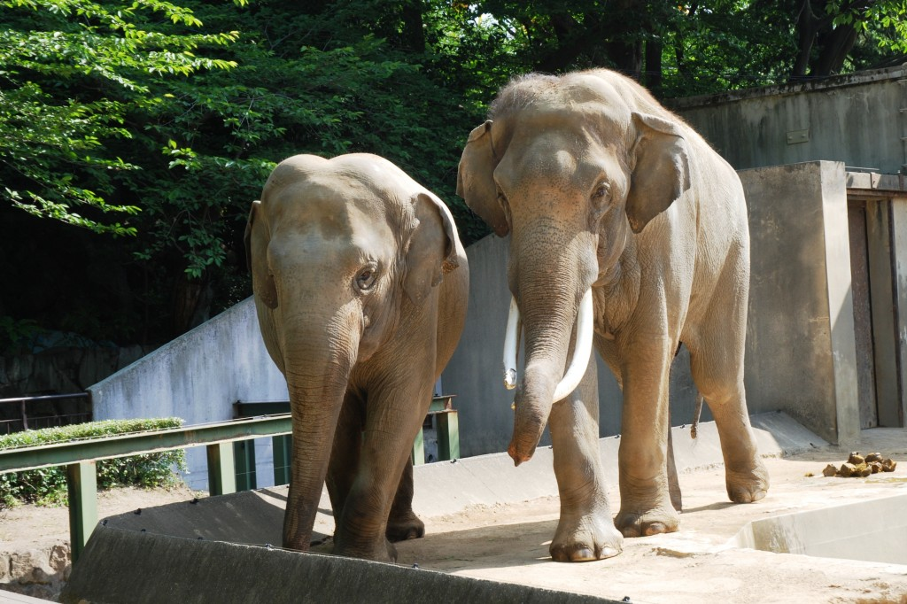 A lovely Indian elephant couple!