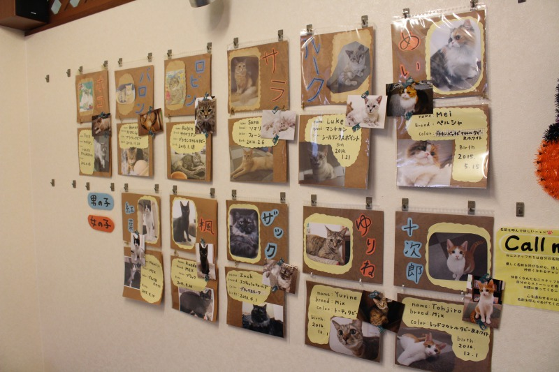 Profiles of Nyanny's cats<br /> <br /> 【Plans】<br /> Plan A: Admission fee for the first one hour<br /> 1,000 yen (*Saturday, Sunday and holiday: 1,200 yen)<br /> Plan B: Admission fee for the first one hour including one drink)<br /> With a soft drink 1,300 yen (Saturday, Sunday and holiday: 1,400 yen)<br /> With an alcoholic beverage 1,500 yen (Saturday, Sunday and holiday: 1,600 yen)